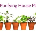 Air Purifying Indoor Plants for Bedroom